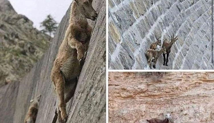 When people wait on your downfall but your the goat
