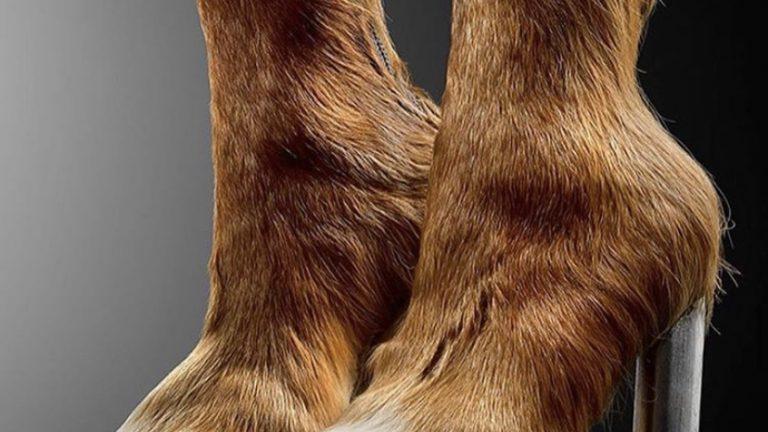 horse heels