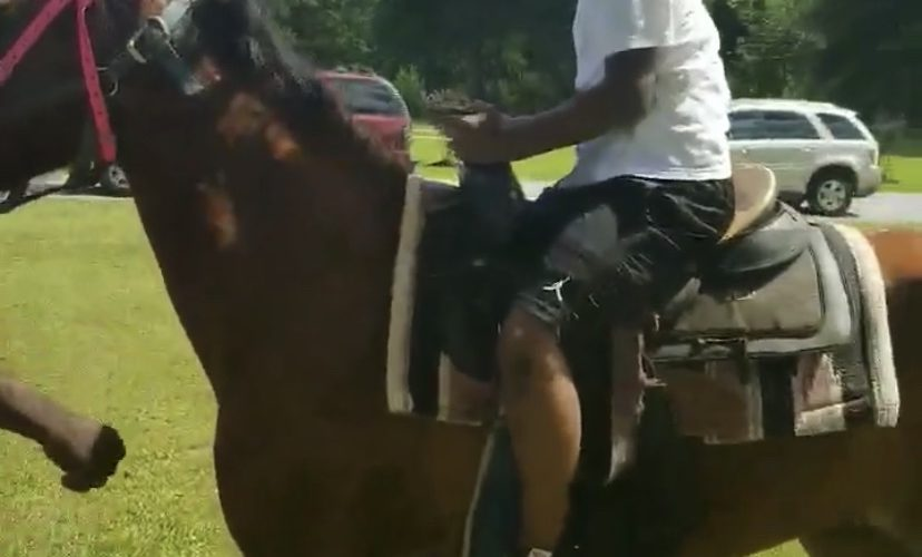 horse takes off with rider