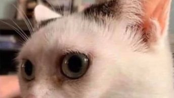 Coworker: Good morning vs me angry cat meme