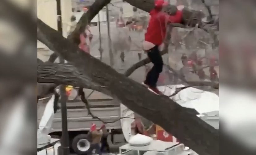 kansas city chiefs fan falls out of tree