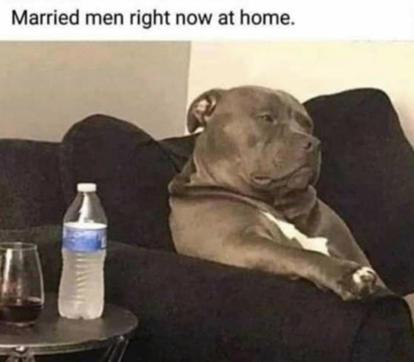 Married me right now at home dog meme