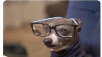 Me when I call it COVID-19 instead of the rona dog meme