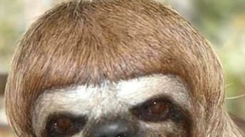 I cut it myself sloth quarantine meme