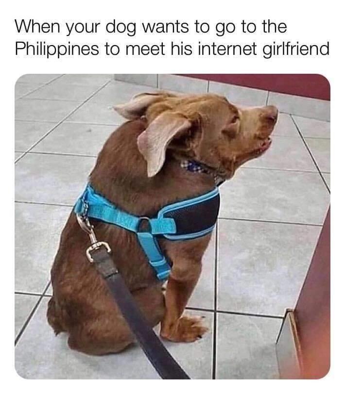 90 Day fiance ed dog meme