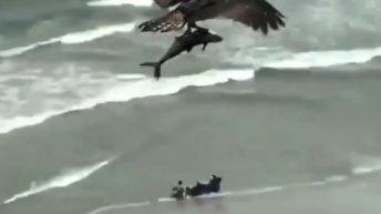 Bird picks up shark