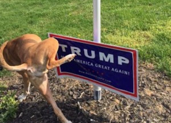 The DOJ doesn't get it the Dog does trump is not well meme