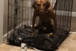 Dog is mad about being put in cage
