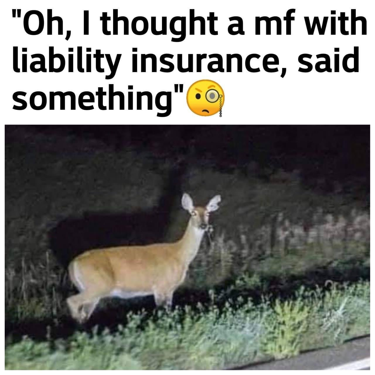 deer running onto highway meme
