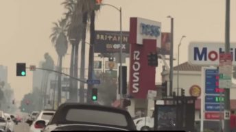 Palm tree on fire in Hollywood