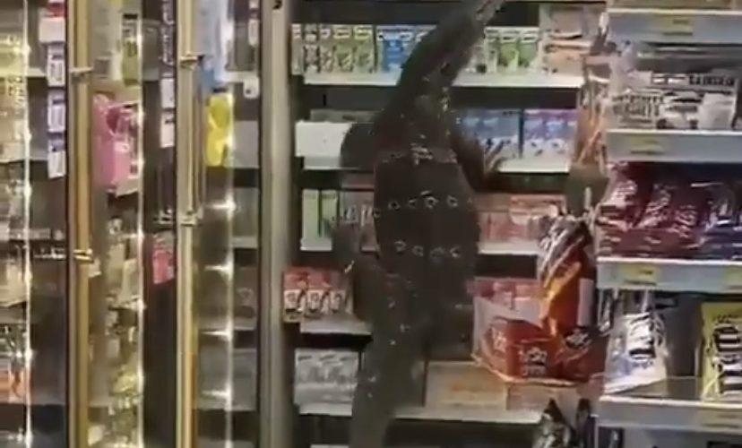 Lizard stops in 7-Eleven store