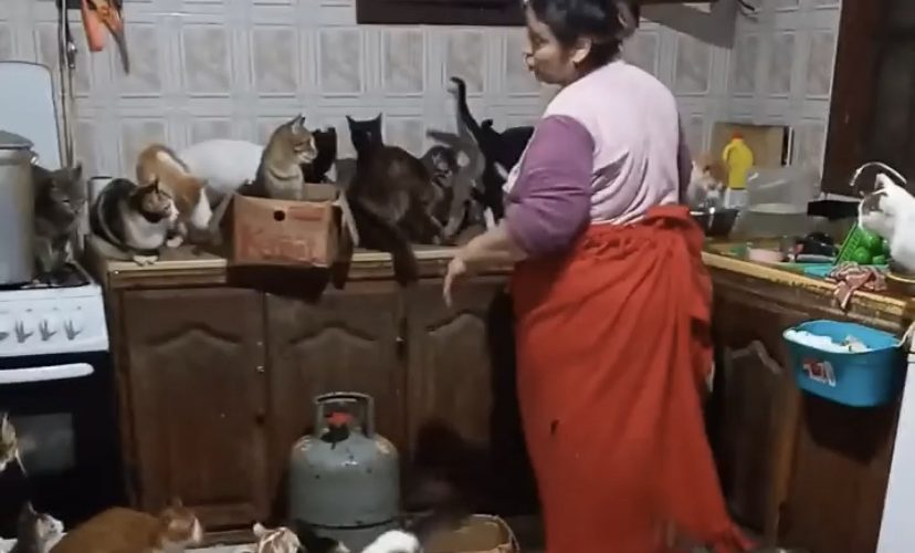 A woman was filmed in her kitchen with a large number of cats that she has as pets in her house.