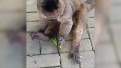 Monkey plays with lighter