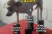 Japan juggling the 2021 Olympics