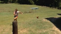 Boy gets chased by chicken